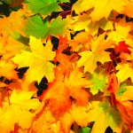 wpid-Decorate-Your-Apartment-For-Fall-V6.jpg